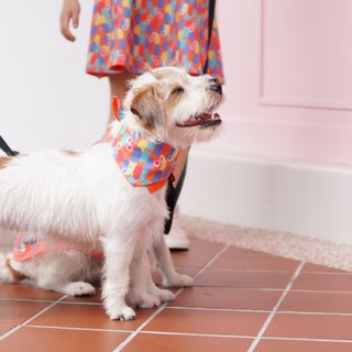Pets - Colorful Infinity Huat Bandana