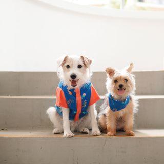 Pets - Blue Victory Yay Bandana